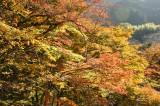 秋 紅葉の景色