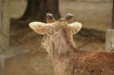 奈良 鹿・背面4