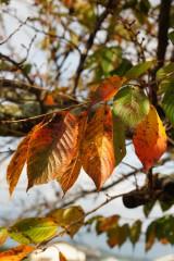 紅葉・桜3