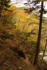 秋の山道2