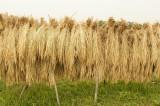 稲束 側面1
