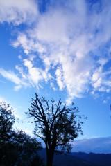 木と広い青空(青強調)