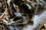 冬の地面・竹