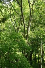 公園・樹木9