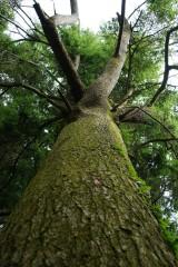樹木のアップ