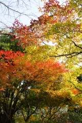 紅葉 木々