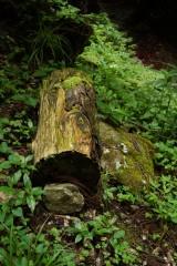 森に放置された丸太