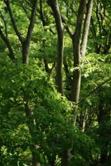 公園・樹木10