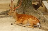 奈良の鹿・側面6
