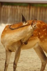 奈良の鹿・振り返り1