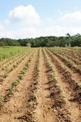 植物を植えた畑の風景2