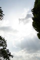 森の上空・太陽光