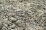 田んぼの土