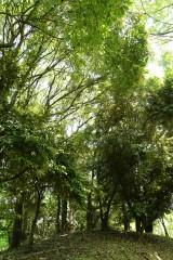 公園・樹木14