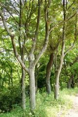 公園・樹木8