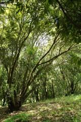 公園・樹木4