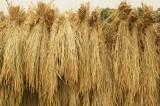 稲束 側面2