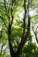 公園内・樹木・木漏れ日