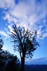 木と青空(青強調)