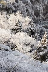 雪景色 積雪した樹木1