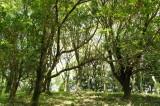 公園・樹木5