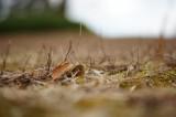 冬の地面・枯枝1