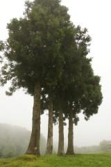 樹木 複数