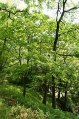 公園・斜面・樹木16