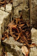 岩 間に溜った枯葉