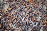 冬の地面・枯葉1