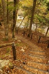 秋の山道3