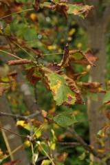 枯れ始めた木の葉3