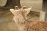 奈良 鹿・背面3