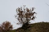 木(トレース向き)