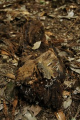 森にあった木片