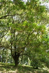 公園・樹木7