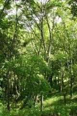 公園・斜面・樹木11