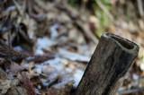 冬の景色・竹