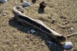 海岸に打ち上げられた木・流木2